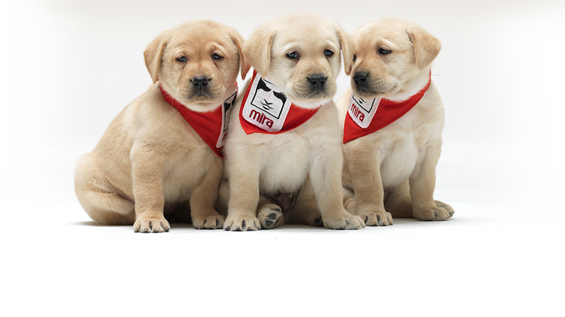 mira-puppies